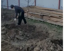 Посадочная яма для деревьев и кустарников