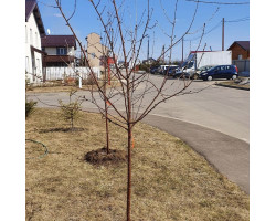 Правила посадки плодовых деревьев и кустарников