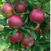 Яблоня «Айдаред»