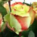 Роза кустовая «Зазу»