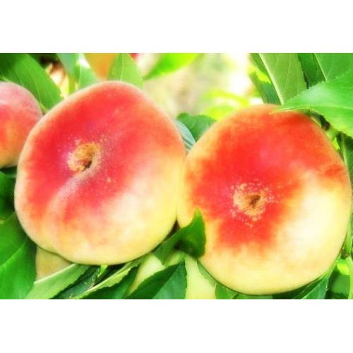 Персик инжирный Владимир
