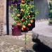 Колоновидный персик «Медовый»
