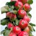 Колоновидная яблоня «Вожак»